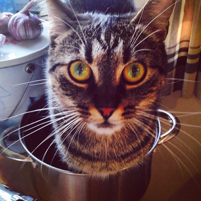 Arya kot perfekcyjny