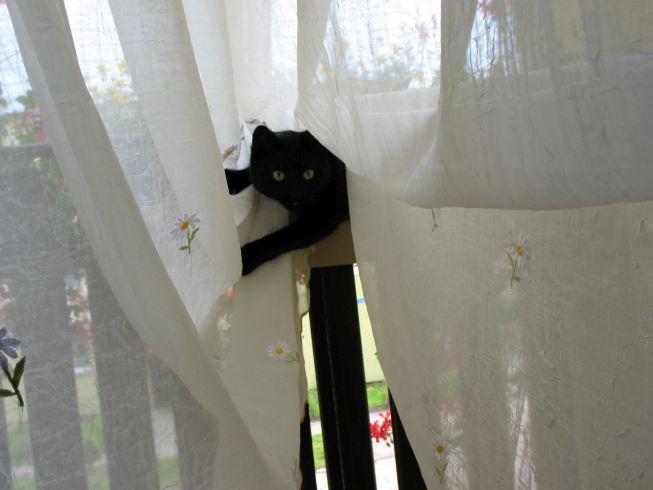 Skacząca kotka na balkon
