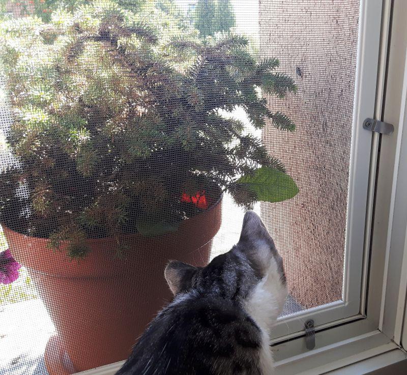 Okno zabezpieczone moskitierą dla kota