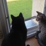 Jak zabezpieczyć okna przed wypadnięciem kotów - moskitiera