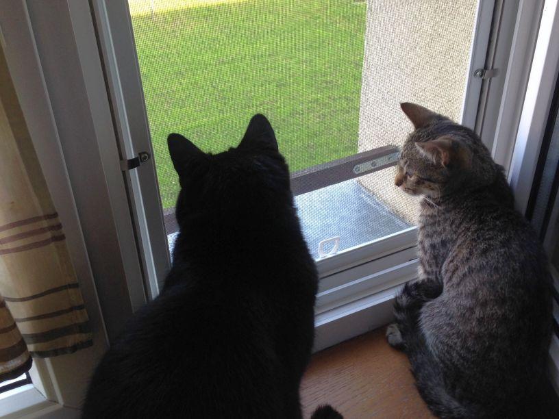 zabezpieczone okna, moskitiera, koty