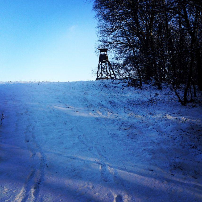Zimowe wybieganie
