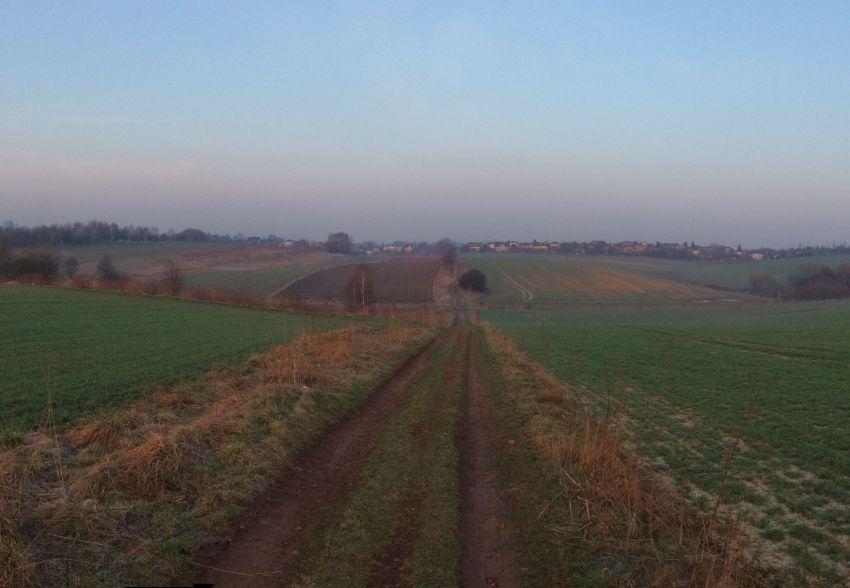 Bieganie rano widok na pole