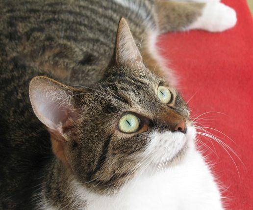 Frodo szczęśliwy kot na balkonie