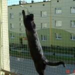 Zabezpieczenie balkonu siatką – koty