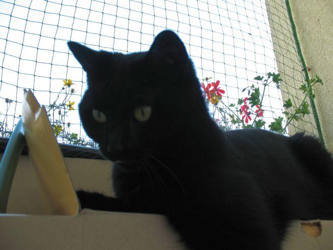 Zabezpieczenie balkonu siatką przed wypadnięciem kotów