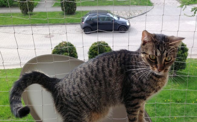 Siatka zabezpieczająca koty na balkonie