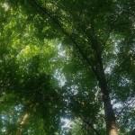 Bieganie po lesie – powrót