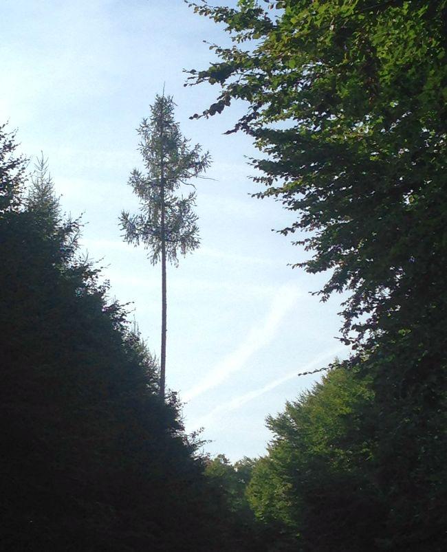 Bieganie po lesie Samotne drzewo
