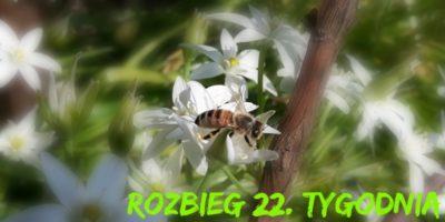 rozbieg 22
