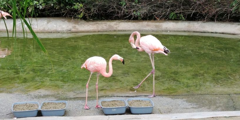 flamingi w ZOO Ostrava