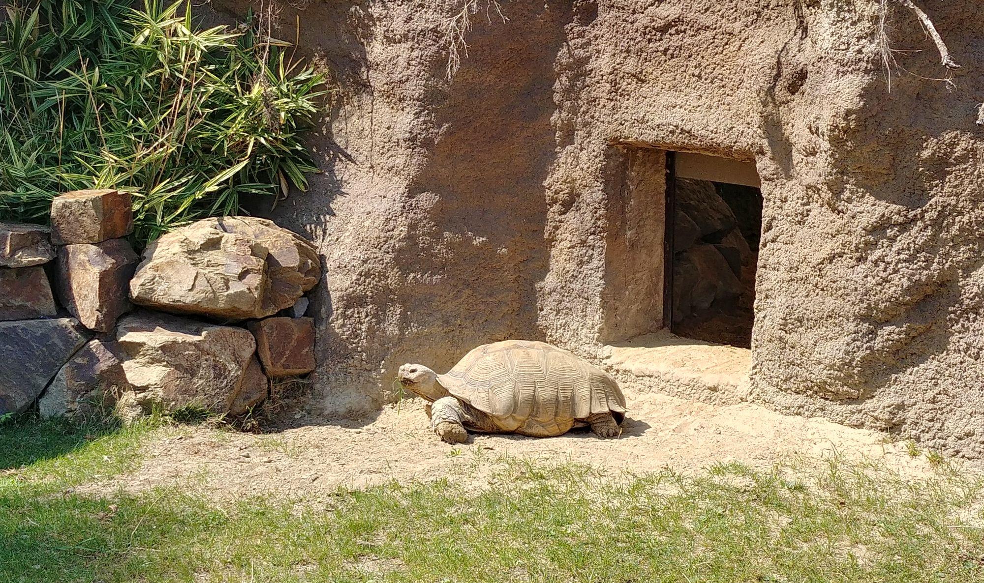 Żółw w zoo Ostrava