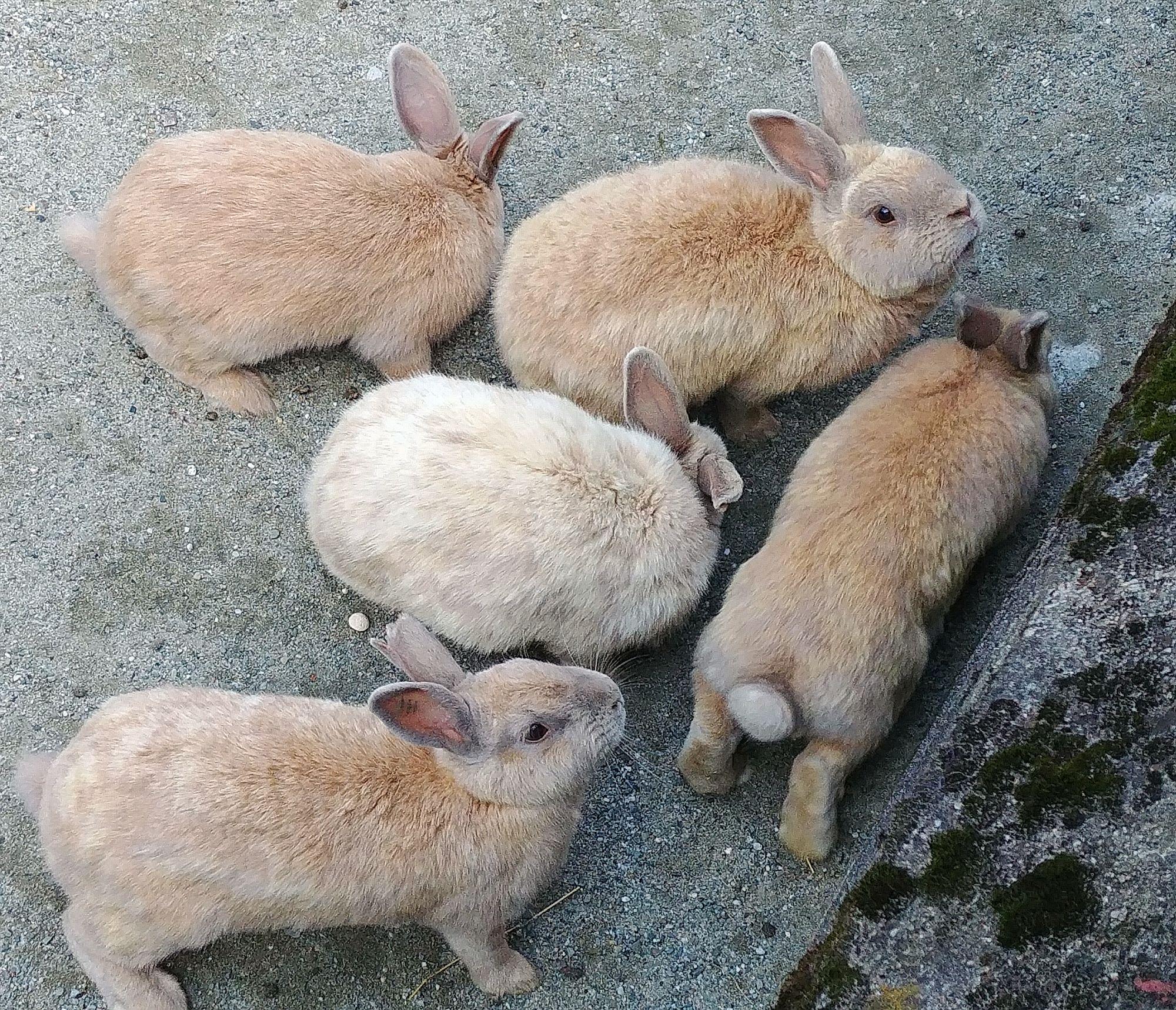 króliki raz jeszcze w ZOO Ostrava