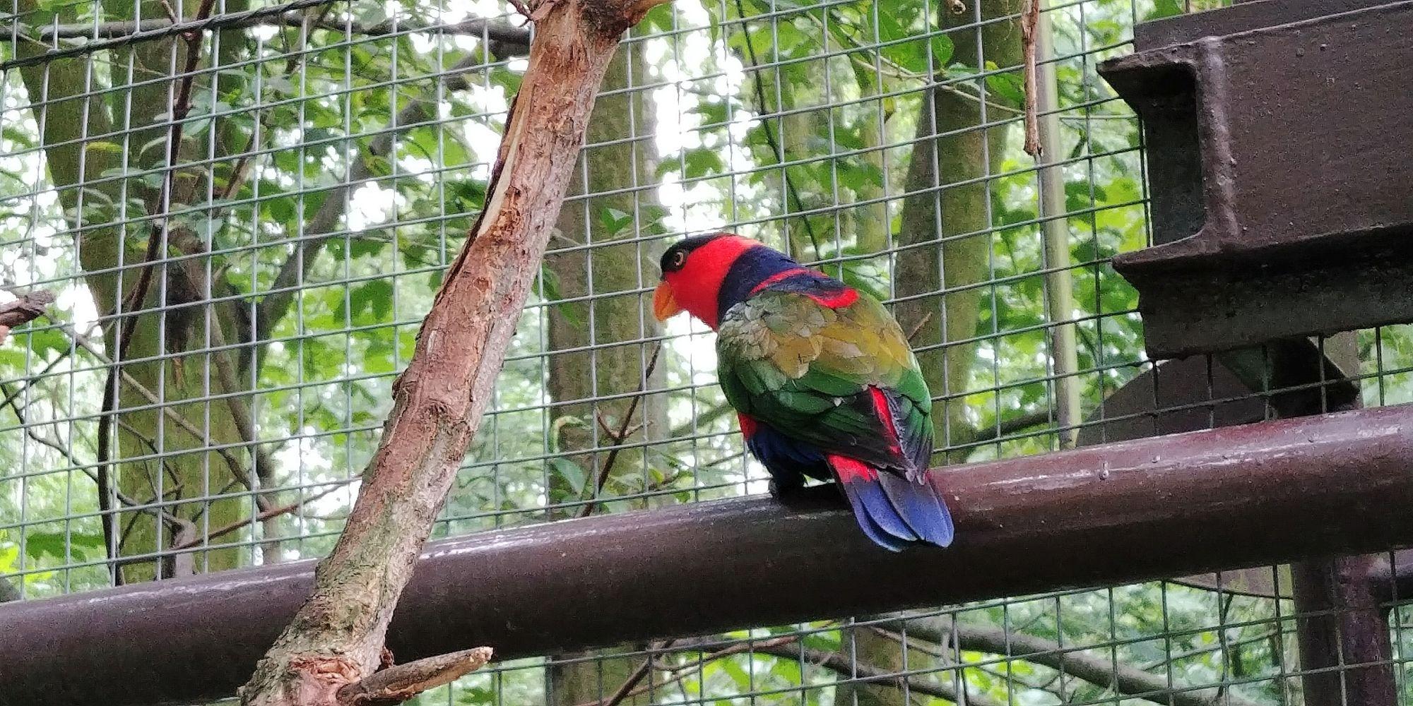 papuga ZOO Ostrava
