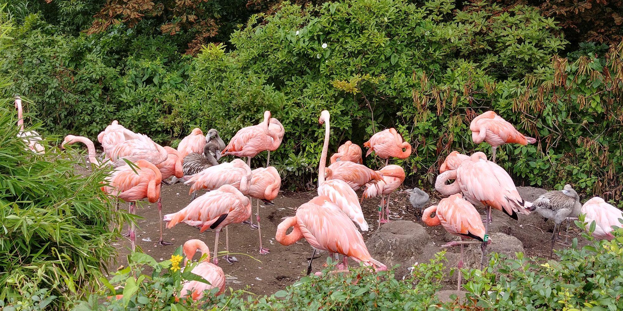 flamingi Ostrava