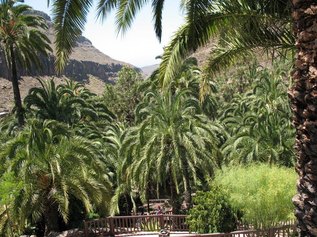 Palmitos Park palmy