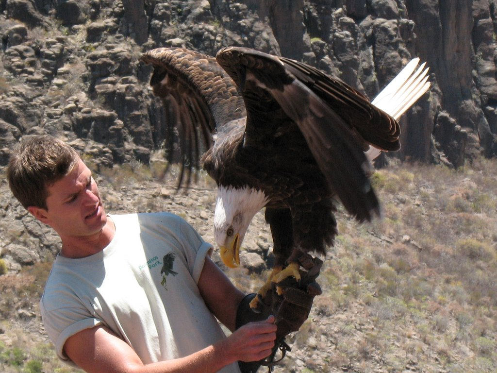 Palmitos Park pokaz ptaków drapieżnych