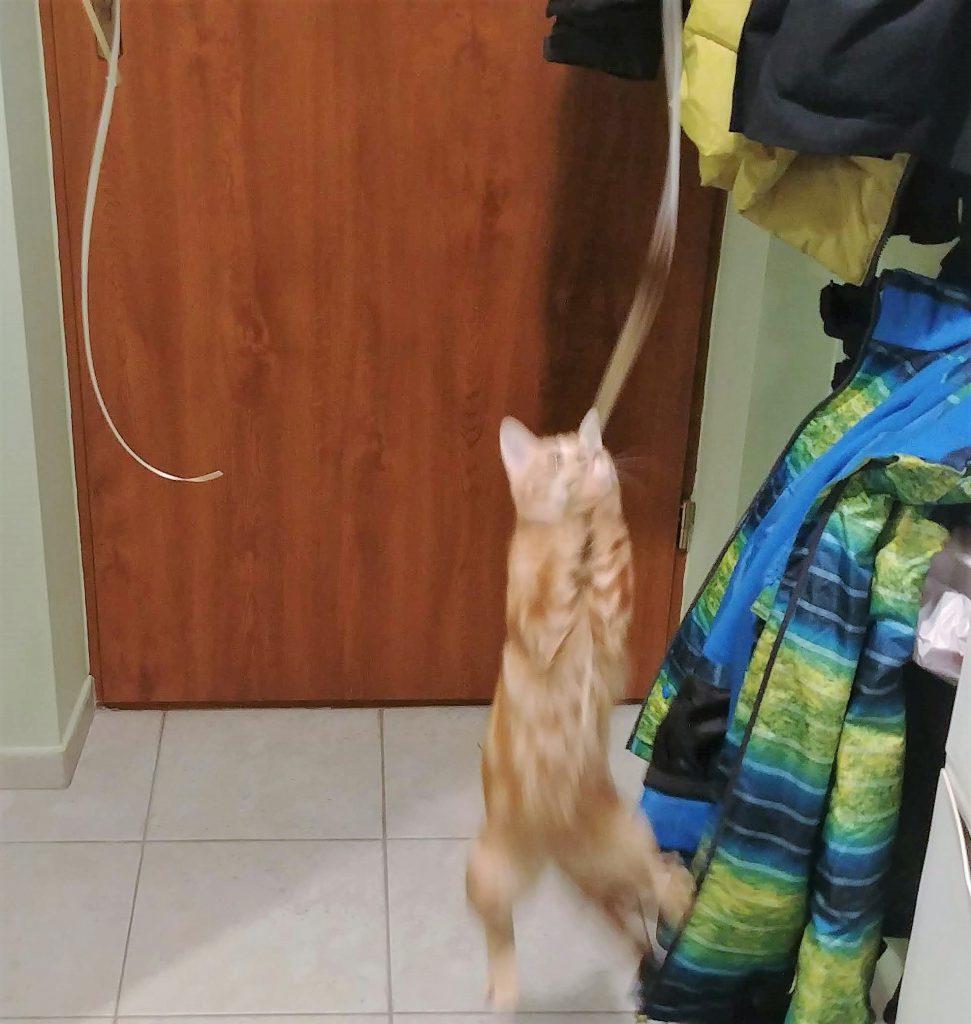 kot Sophie w locie