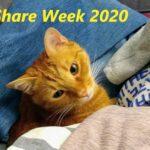 Polecane blogi - Share week 2020