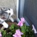 Zabezpieczanie okien - koty